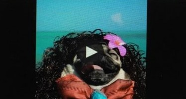 Doug The Pug encarna Moana e encanta as redes sociais