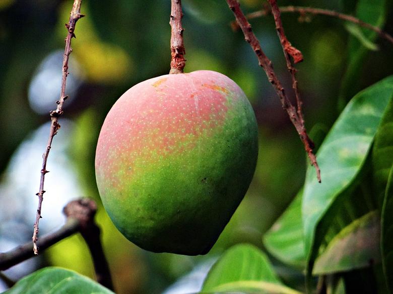 Ajuda a prevenir certos tipos de câncer - Isso mesmo! Além de uma delícia, a fruta contém uma grande quantidade de fibras e antioxidantes que atuam na prevenção de câncer de mama e cólon. (Foto: Pixabay)