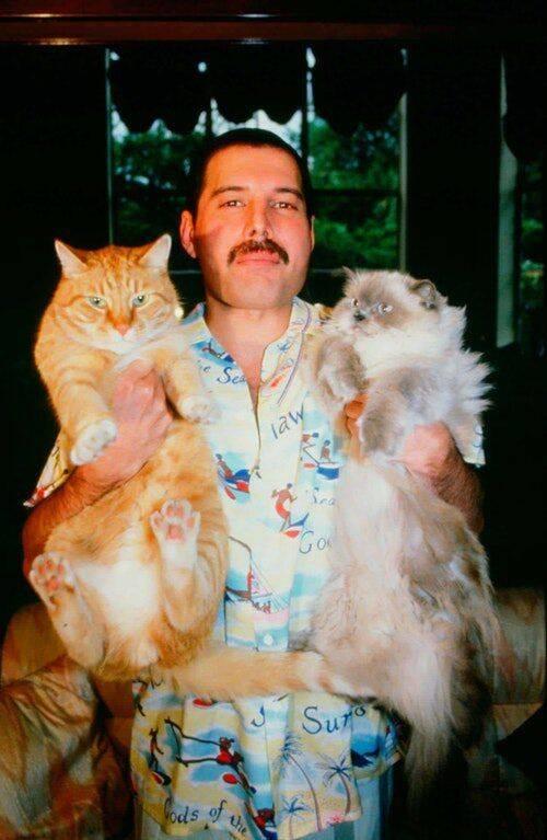 Freddie Mercury tinha nove gatos: Tom, Jerry, Oscar, Tiffany, Delilah, Golias, Miko, Romeo, e Lily. (Foto: Reprodução/ Pinterest)