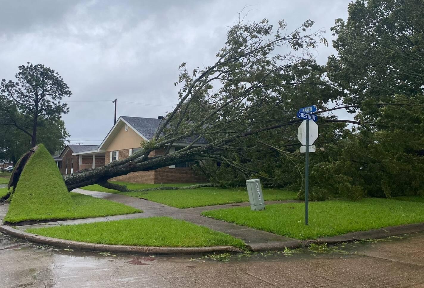 Em Morgan City, imagens mostraram uma arvore derruba pelo furacão. (Foto: Twitter)