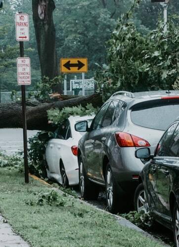 O Departamento de Transporte da Louisiana alertou os motoristas que muitas árvores foram derrubadas e com isso, as estradas no Sul estavam ficaram totalmente bloqueadas. (Foto: Unsplash)