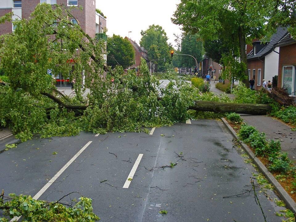 O Gabinete do Xerife de Prairieville confirmou que um acidente com uma árvore deixou uma pessoa morta. (Foto: Pixabay)