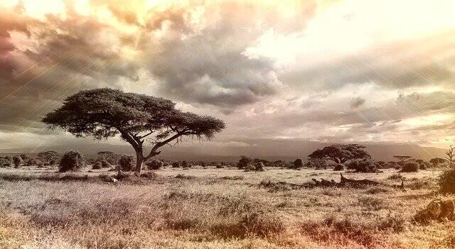 A metade da floresta amazônica pode se transformar em savana (Foto: Pixabay)