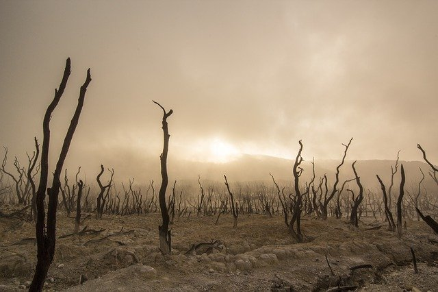 As altas temperaturas podem fazer com que animais e as plantas se afastem milhares de quilômetros dos seus habitats naturais até o fim do século (Foto: Pixabay)