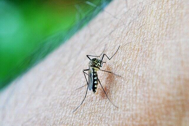 A população mundial ficará mais exposta a doenças provocadas por vetores, como dengue, febre amarela e zika (Foto: Pixabay)