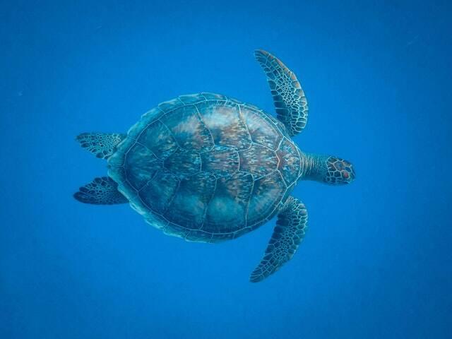 Até 54% das espécies terrestres e marinhas do mundo estarão ameaçadas de extinção neste século (Foto: Pexels)