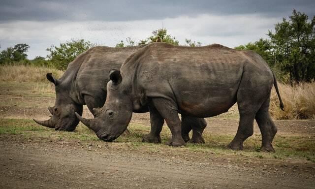 São estimadas cerca de mil vezes mais do que o século passado (Foto: Pexels)