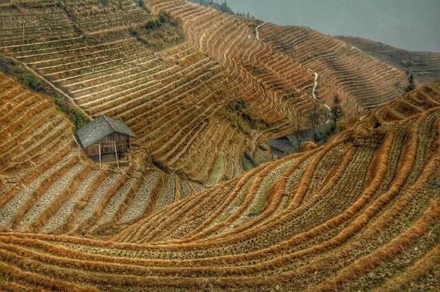 As regiões de plantações de arroz na Índia não serão uma terra frutífera daqui a alguns anos (Foto: Pexels)