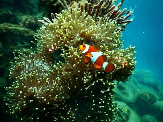 As áreas que contém biodiversidade, como recifes de corais de aguas quentes e manguezais (Foto: Pexels)