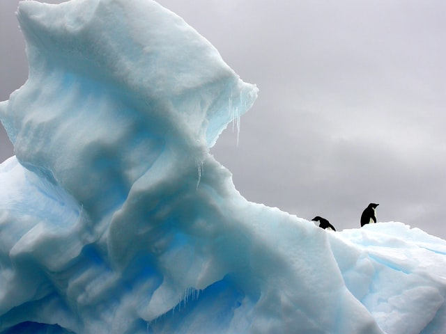 Os animais polares, como pinguins, focas e ursos estão em risco severos (Foto: Unsplash)