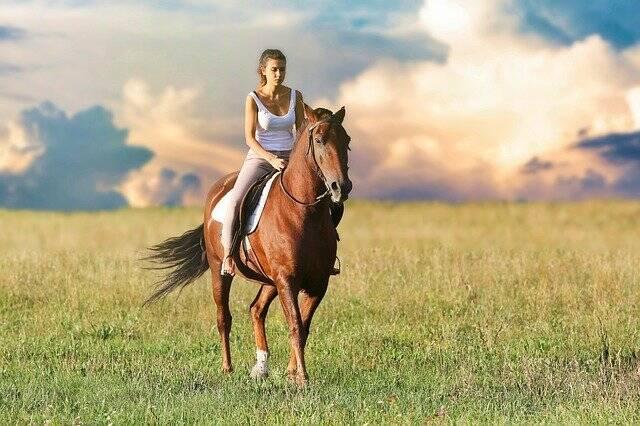 A sentença por roubo de cavalo é pena de morte na Flórida, EUA(Foto: Pixabay)