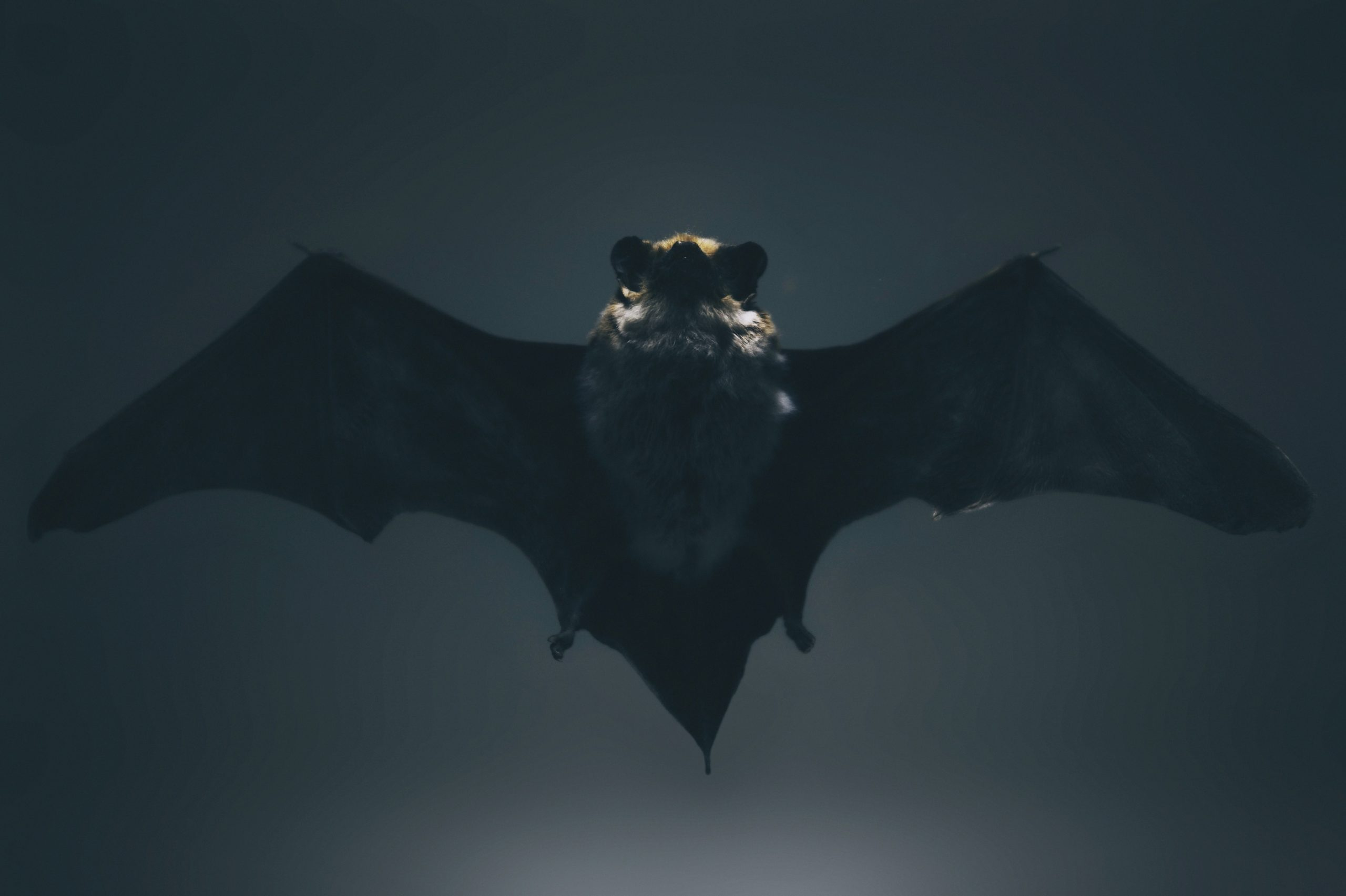 Em 2018, o vírus Nipah causou um pequeno surto no sul da Índia, deixando as autoridades preocupadas. A doença, que também é transmitida por morcegos, apareceu pela primeira vez na Malásia. (Foto: Unsplash)