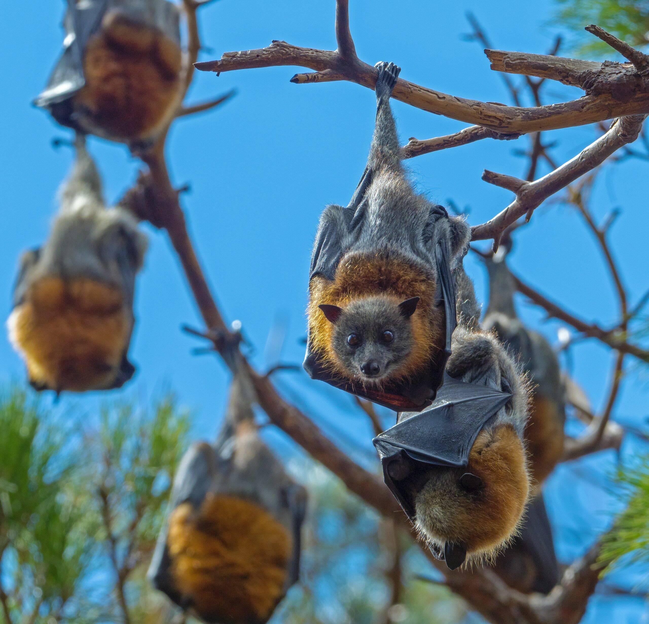 Assim como os outros, esse vírus vem de morcegos. A infecção por ele, causa uma doença fatal, tanto em humanos, quanto em cavalos. (Foto: Unsplash)