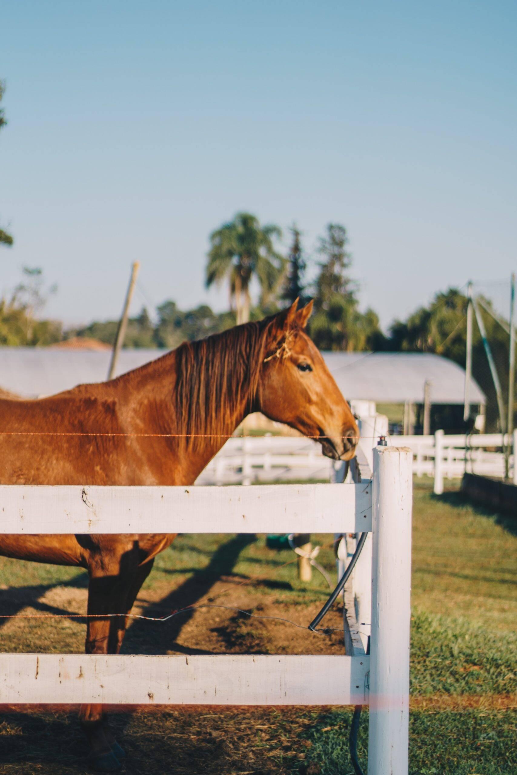 O primeiro surto registrado da doença aconteceu num estábulo em Brsibane, na Austrália. Desde então mais de 70 cavalos e aproximadamente quatro pessoas morreram ao contrair o vírus. (Foto: Unsplash)